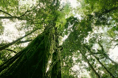 Although it is estimated half of the contries land is made up of Rainforest that number is decreasing vastly everyday. & cougarbiology / Tropical Rainforest Group B