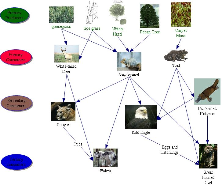 Temperate Deciduous Forest 10 Biomes